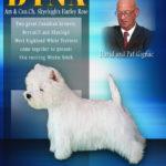 Gignac_David (Dyna Westie)_04-08-2015