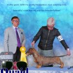 Gignac_(Quaid Dacshund)